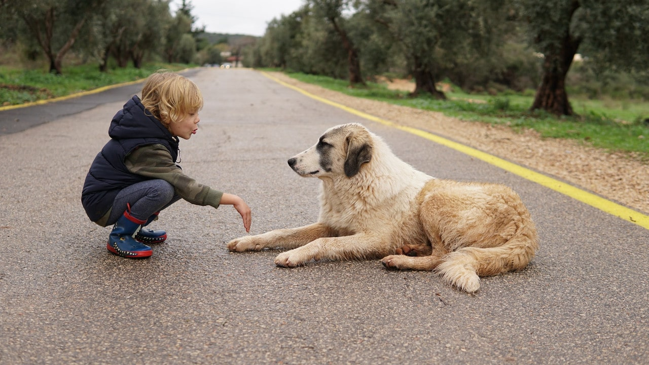 Eco-Friendly dog owner