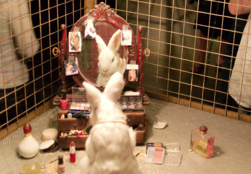 animal cosmetics testing