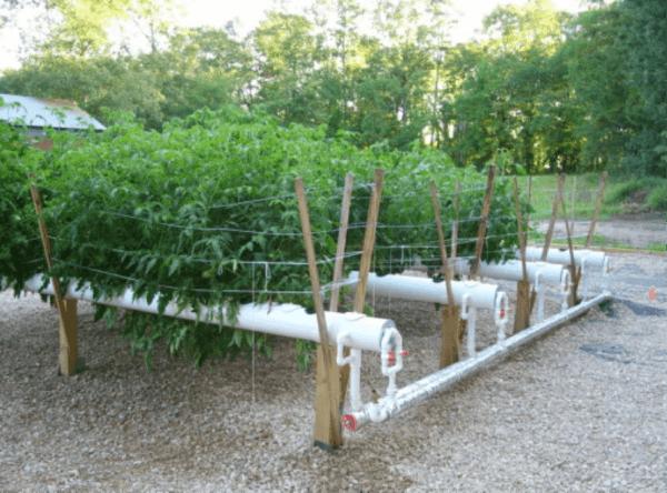 hydroponics gardening