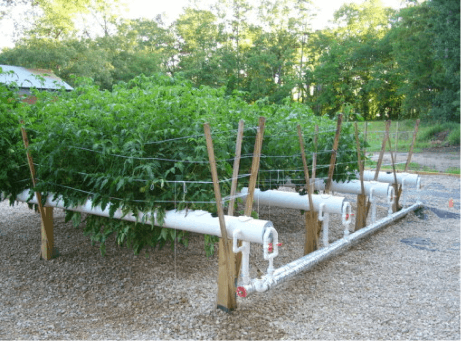 Hydroponics Worldwide An Excellent Future For Farming At