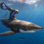 Ocean Ramsey swimming with shark