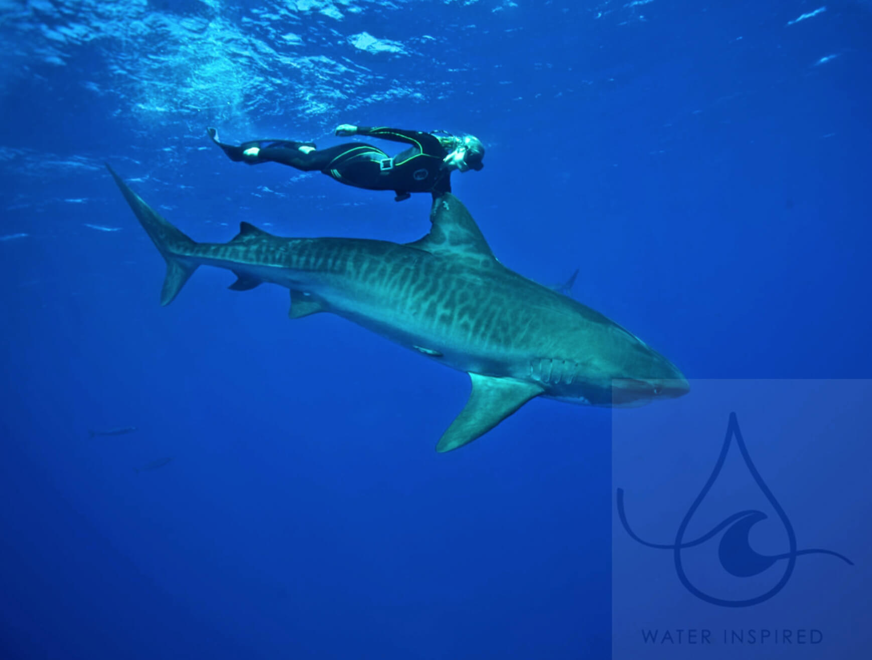 Ocean Ramsey Nude Photos 72