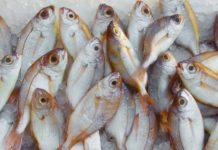 bycatch fish