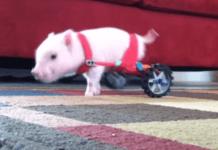 chris p bacon