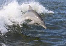 dolphin bycatch