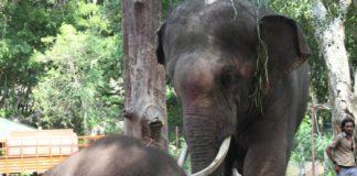 Sunder the elephant