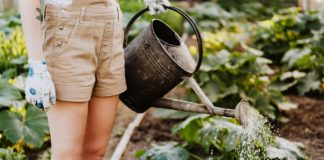 Environmentally-Responsible Gardening