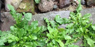 kill weeds naturally