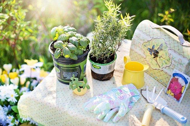 herb gardens planting