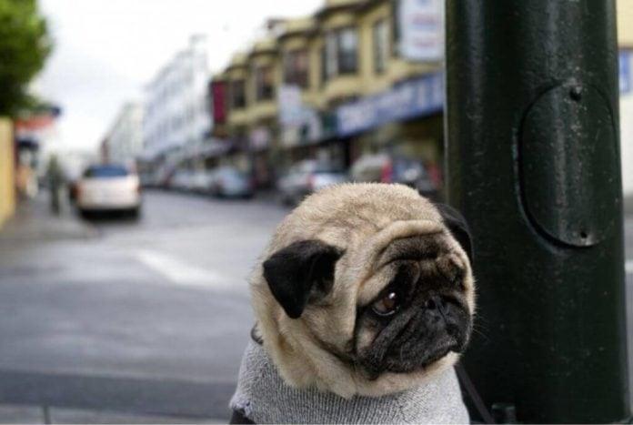 save puppies