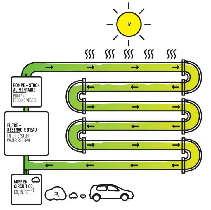 how an algae farm works
