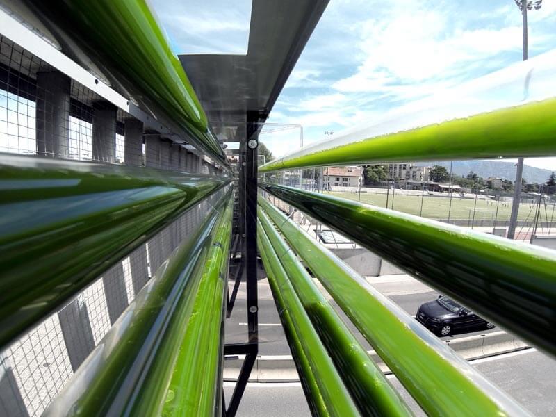 algae farm in transparent tubes