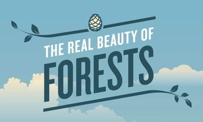 forests-infographic-featured