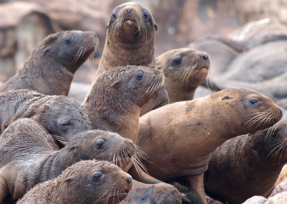 A Record Number of Sea Lion Pups Starve as Humans Continue ...