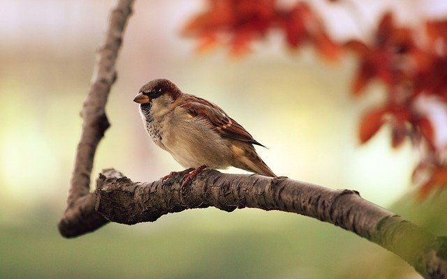 birds - keep critters out of your garden