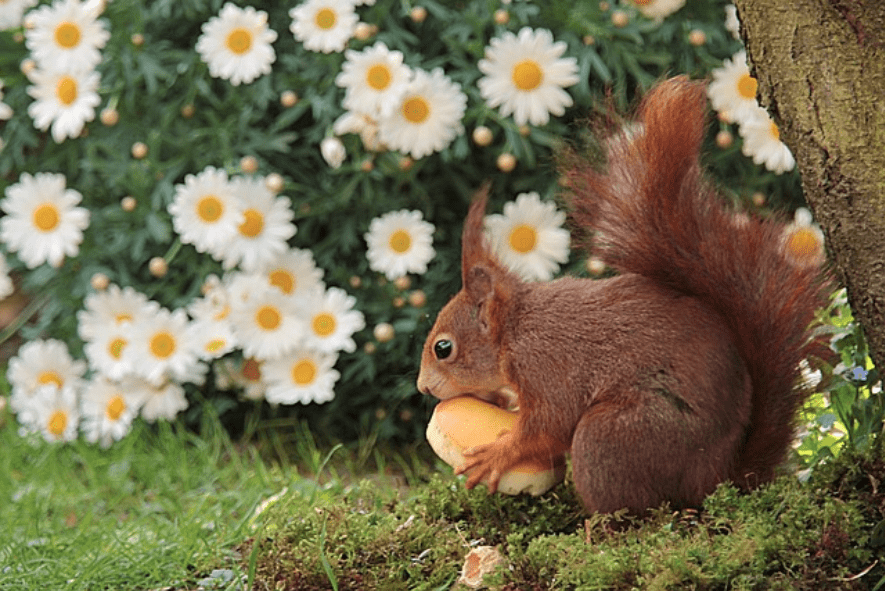 How to keep critters out of your garden greener ideal - How to keep squirrels from digging in garden ...