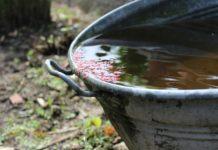 collect rainwater for environmentally friendly gardening