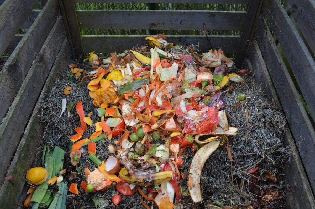 compost bin content