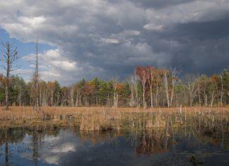 wetland