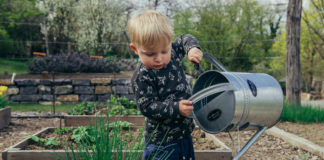 is watering plants with softened water good or bad