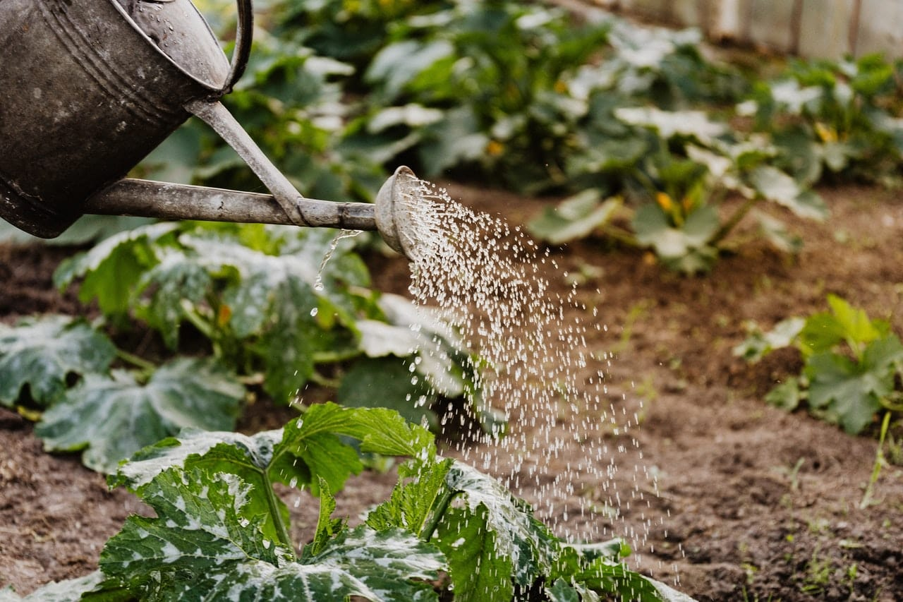 softened water is bad for plants