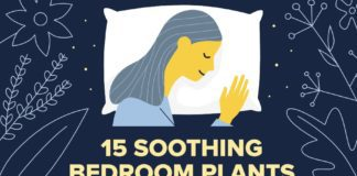 15 soothing bedroom plants to help you sleep