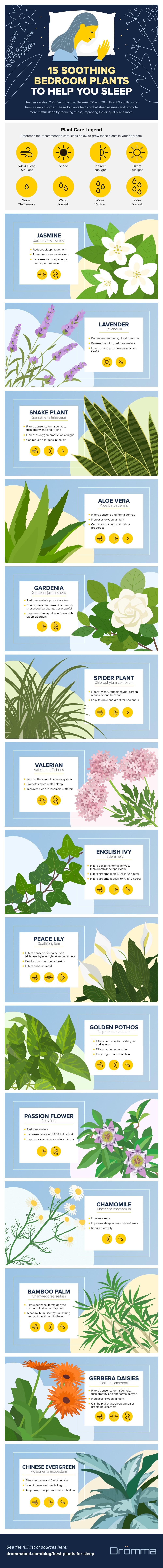 Infographic on plants that help sleep