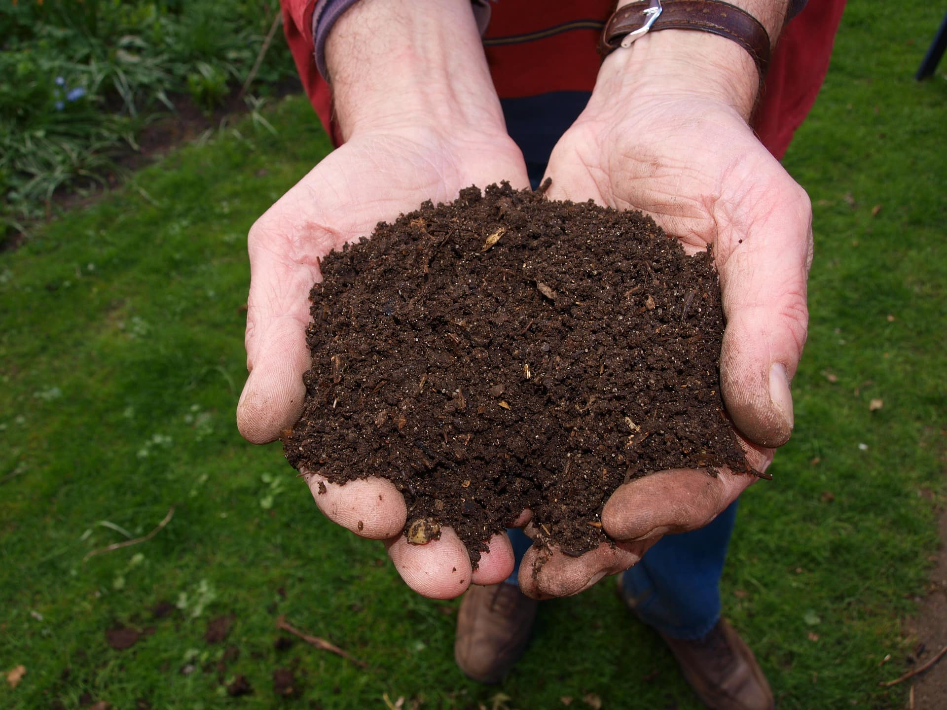 compost in hands