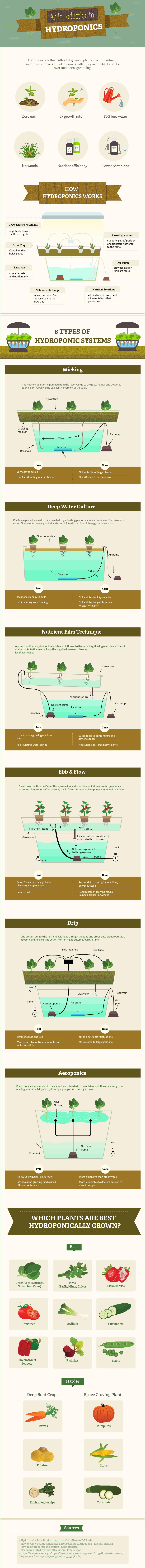 hydroponic gardening infographic