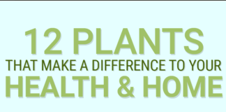 12-plants-for-improving-your-health-home