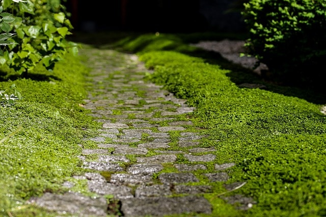 Keep_Your_Garden_Pathways_and_Patio_Clean