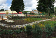 A garden that manages stormwater runoff.