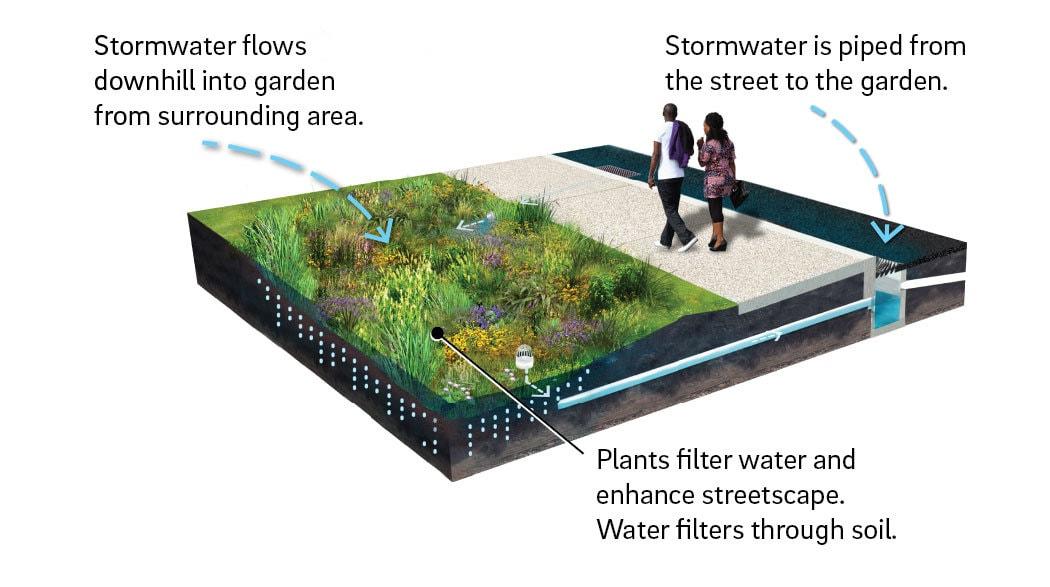 How a rain garden works