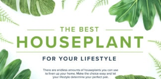 the best houseplant for your lifestyle