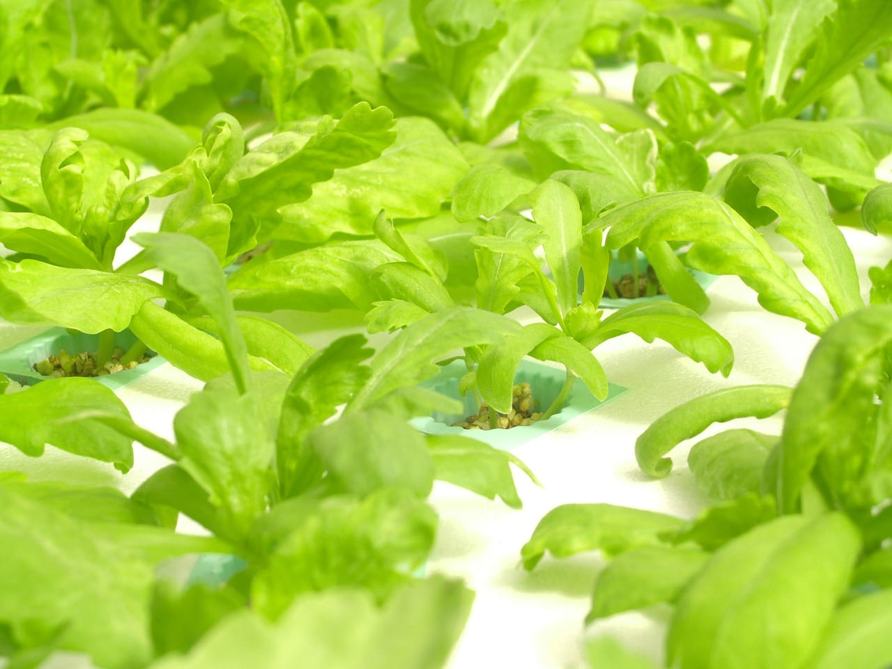 introduction-to-hydroponics-the-beginners-guide-infographic