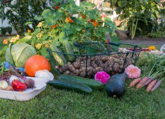 6-vegetable-planting-tips-beginners