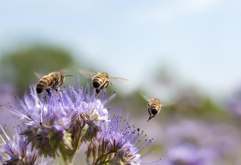 Bees on a plant