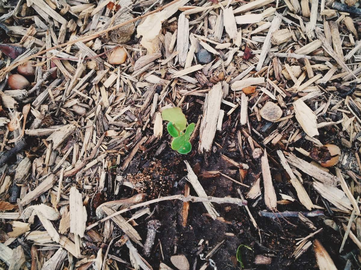 homemade-weed-killers-use-garden