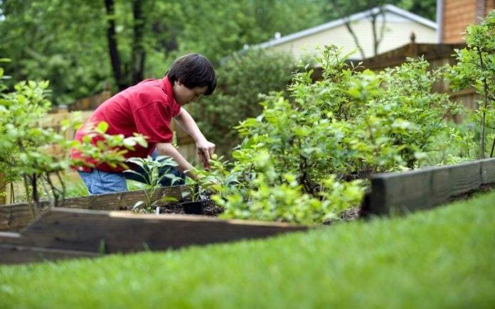 10-autumn-gardening-tips