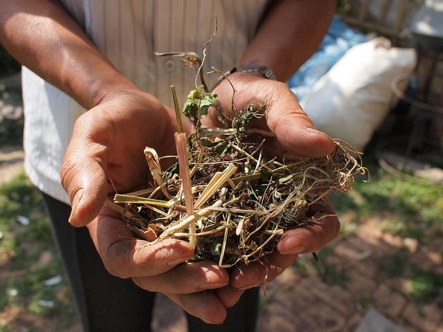 fertilize-soil