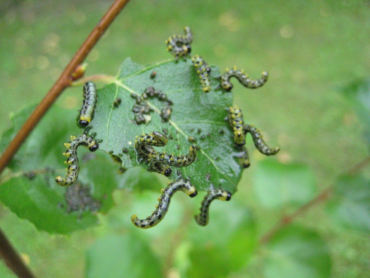 garden-worms