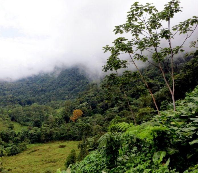 rainforests-world-infographic-costa-rica