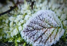 8-tips-for-vegetable-gardening-in-winter