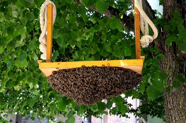 Beekeeping as a Hobby