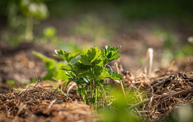crop mulching