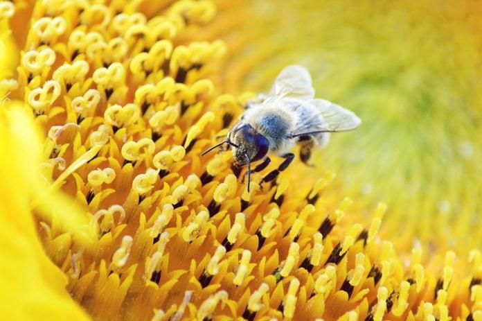 cultivating-sustainable-garden-beekeeping