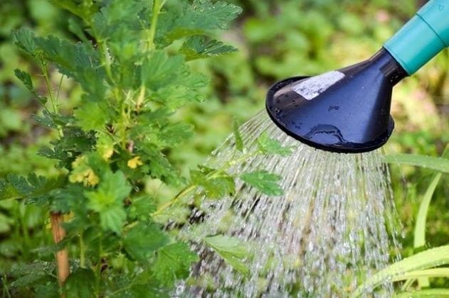 watering-garden-plants-631x420