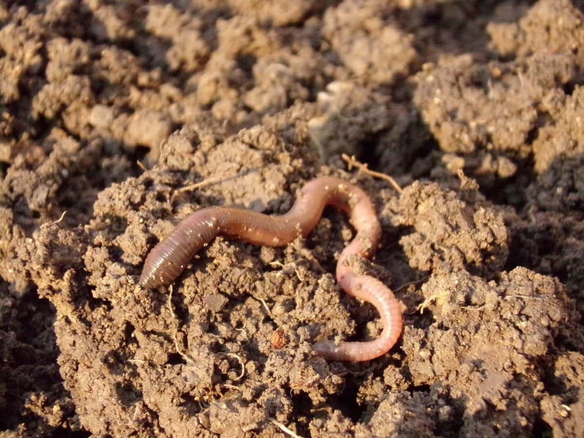 Food waste solutions - Raise Earthworms