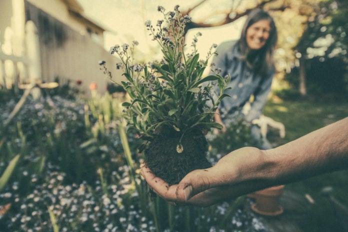 eco-friendly habits - gardening