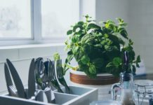 best herbs for your kitchen
